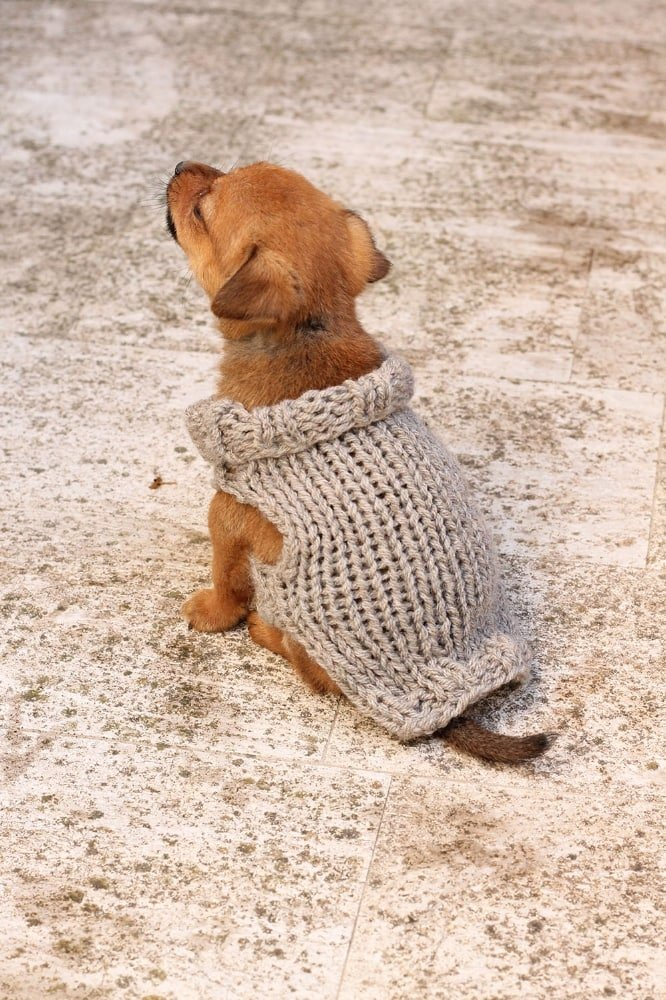 10 Stunning Examples Of Beautiful Fall Dog Sweaters Free Knitting