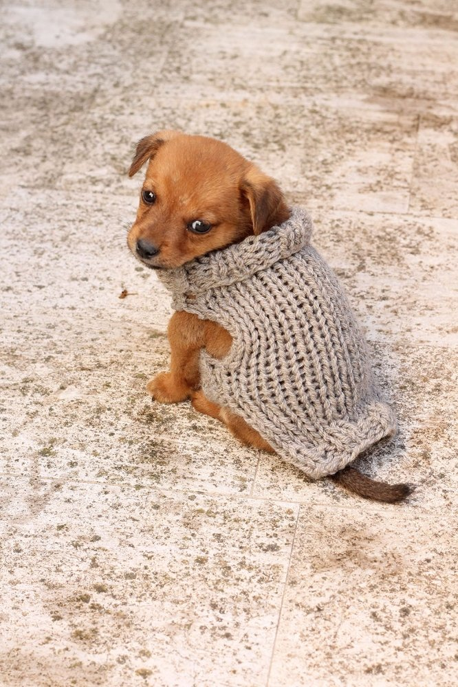 Free Knitting Pattern For A Puppy Sweater Free Knitting Patterns