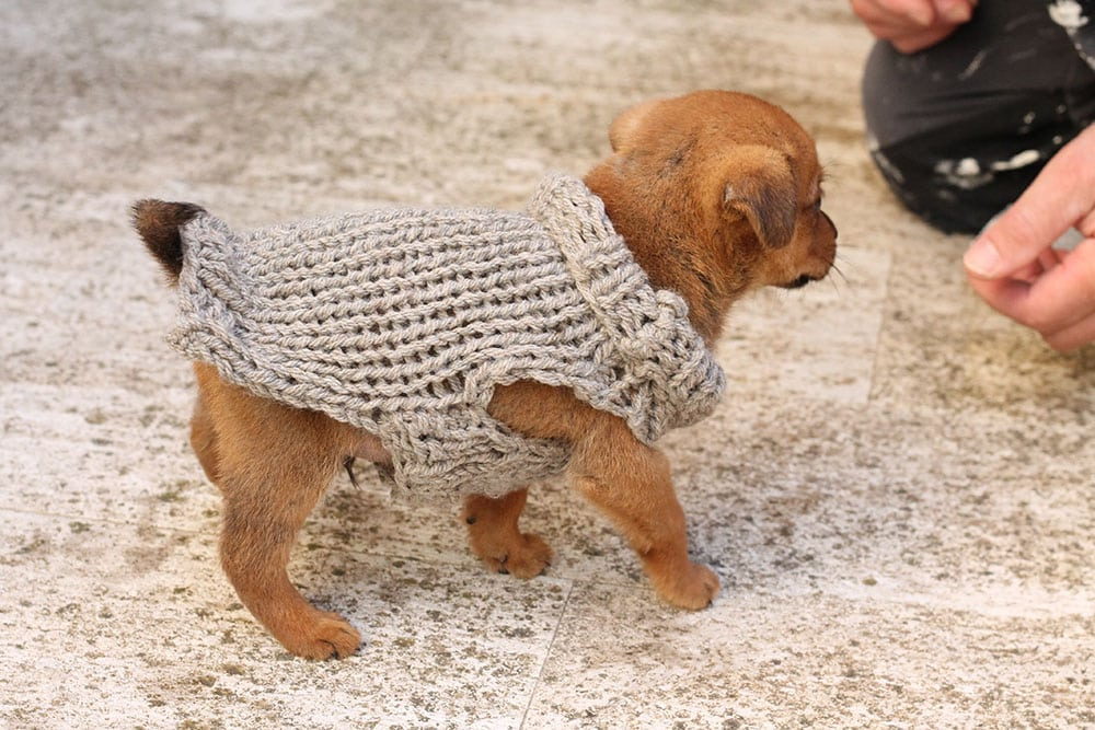 Puppy Sweater Knitting Pattern Free Knitting Patterns Handy