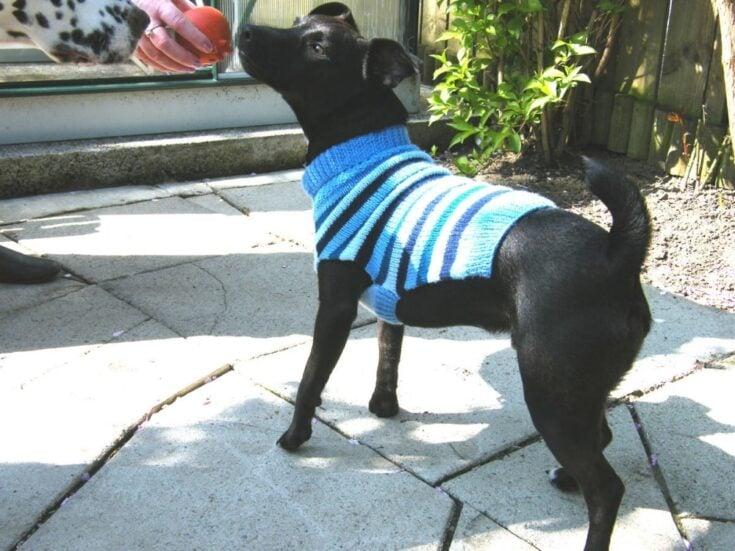 Dog Sweater Knitting Pattern