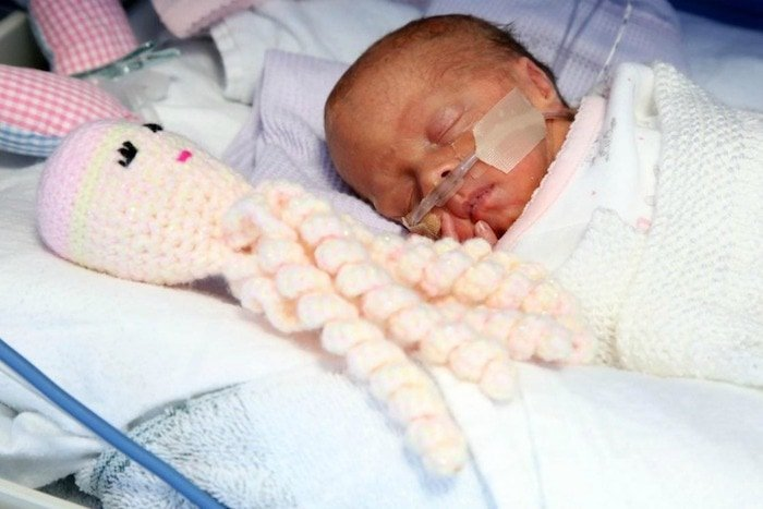 premature-baby-octopus-stuffed-toy