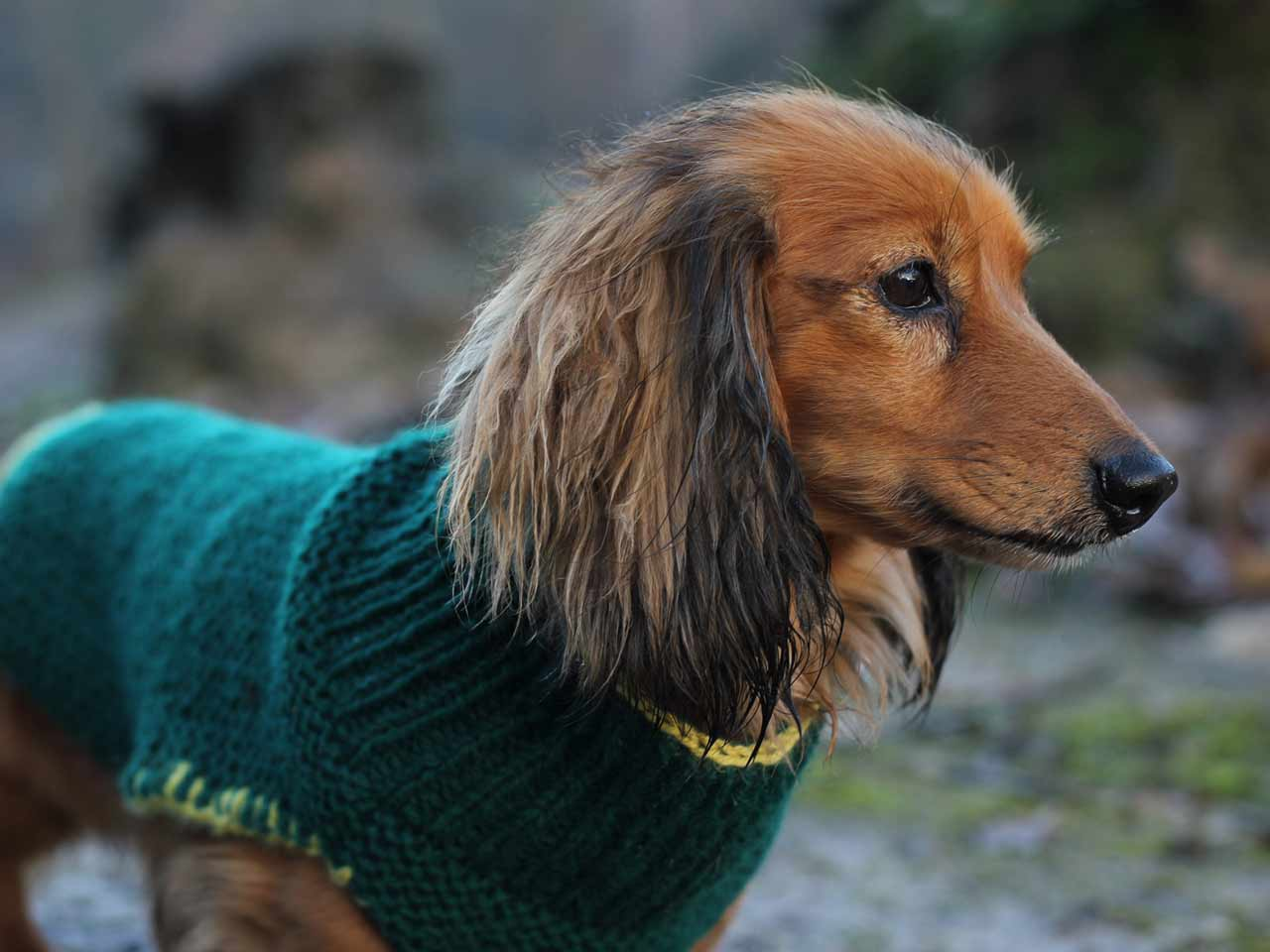 knitted-dog-coat