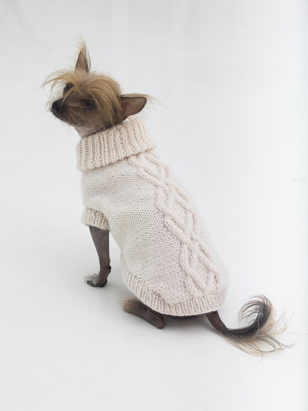634ea99ddab8cf Get the free knitting pattern from Lion Brand. dog sweater ...
