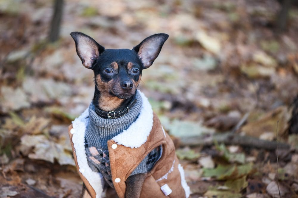 10-Stunning-Examples-Of-Beautiful-Fall-Dog-Sweaters