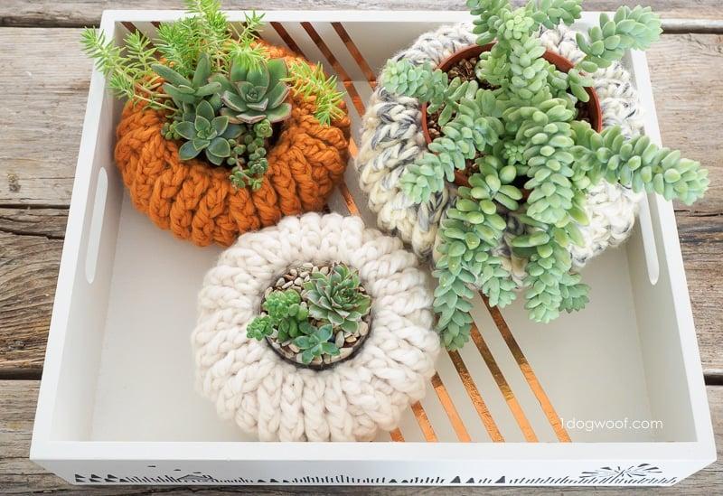 succulent-pumpkin-steps-23