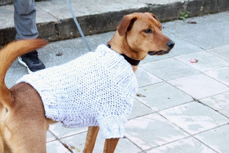 How To Knit A Dog Sweater In The Round How To