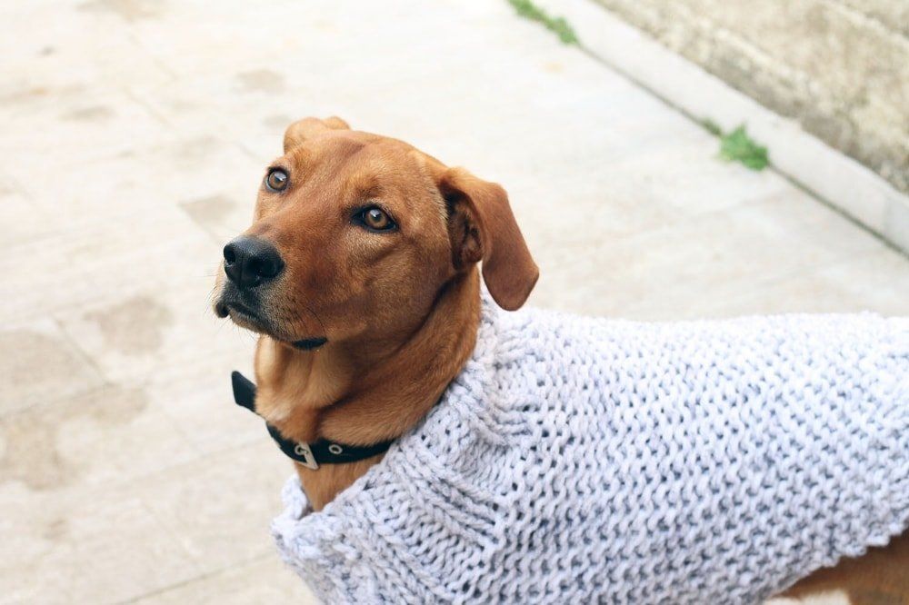 Dog Sweater Knitting Pattern Easy Free Knitting Patterns Handy