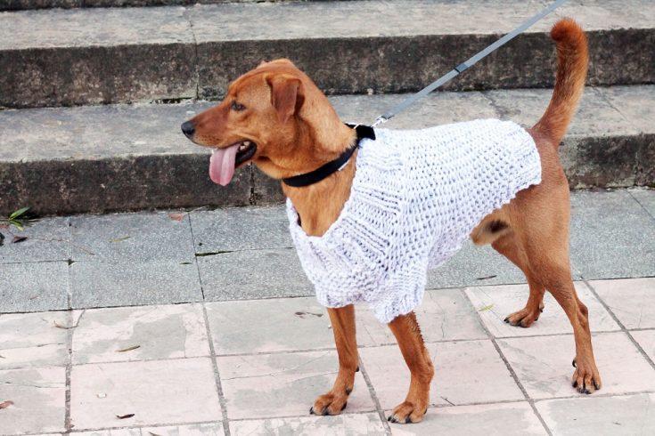 Patrón de Tejido de Suéter de Perro Gratis