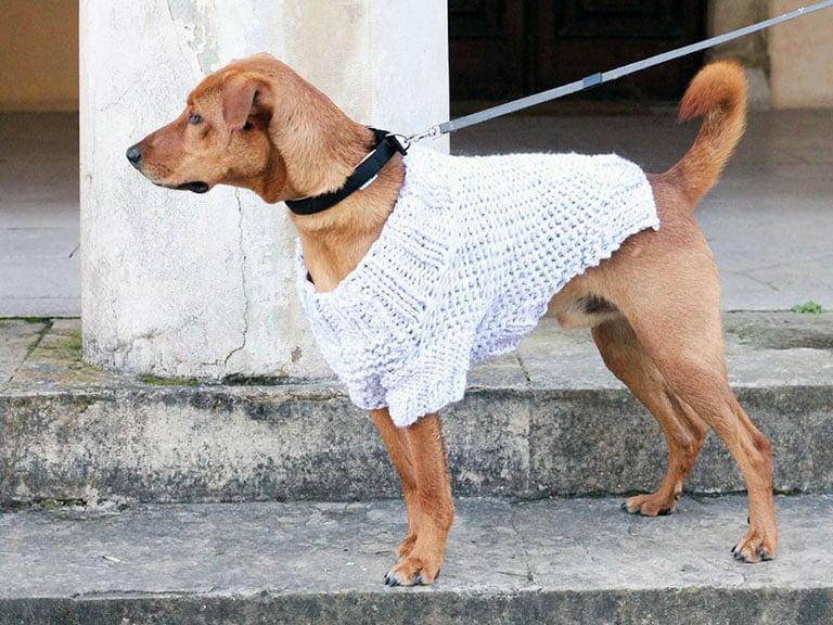 Free Dog Sweater Knitting Pattern Free Knitting Patterns Handy