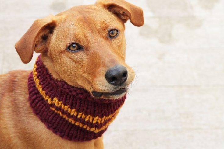 The Gryffindor Dog Cowl Knitting Pattern