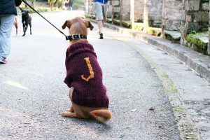 Dog Sweater Mischief Managed Free Knitting Pattern Free