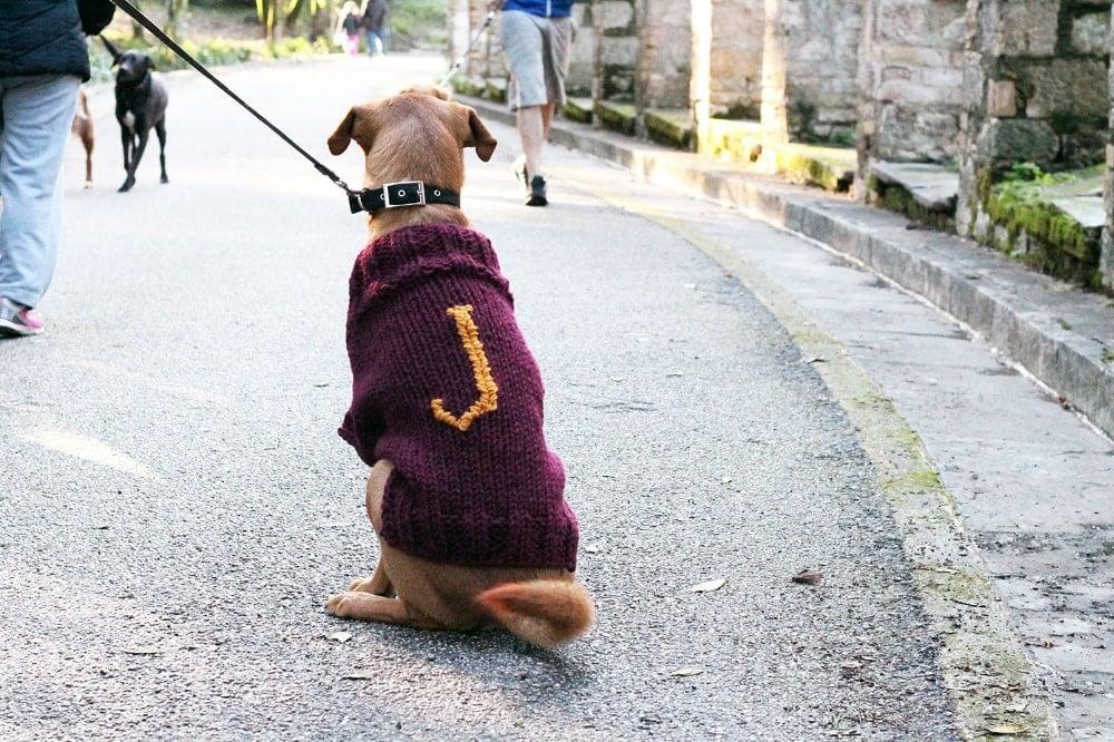 Dog Sweater Mischief Managed Free Knitting Pattern Free