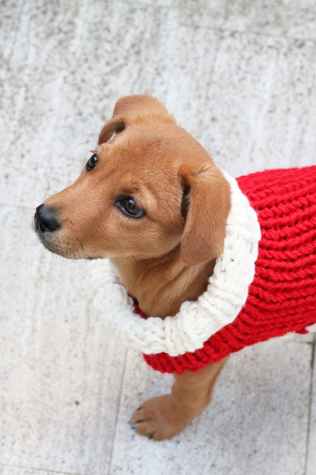 christmas-puppy-sweater