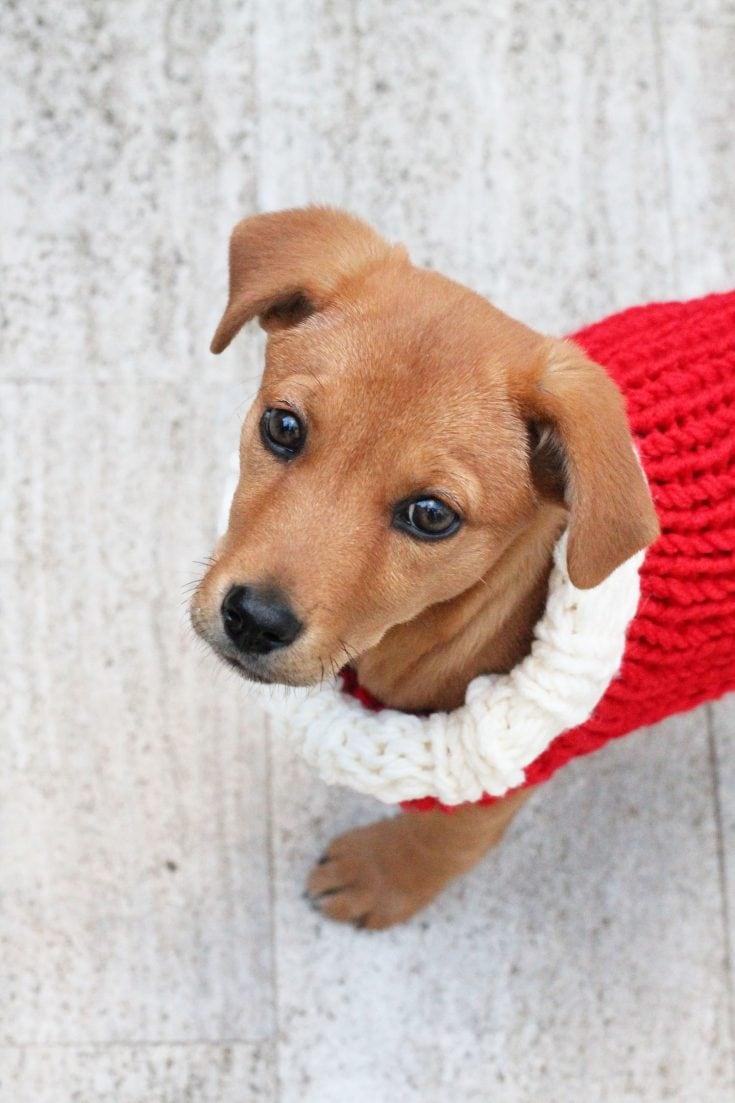 Puppy Christmas Sweater Knitting Pattern