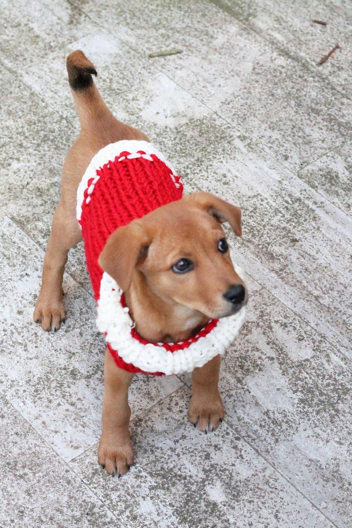 Christmas Puppy Sweater Knitting Pattern