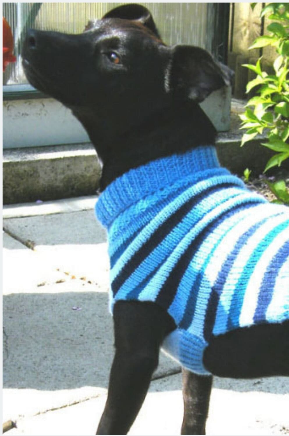 Dog sweater knitting pattern