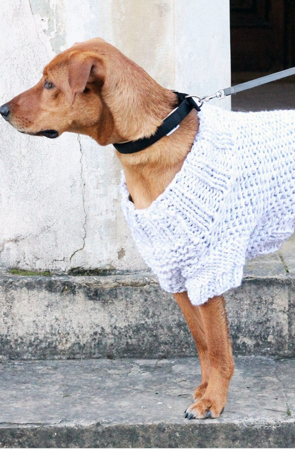 Dog Sweater Knitting Pattern | Easy