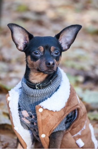 10 Beautiful Fall Dog Sweater Knitting Patterns