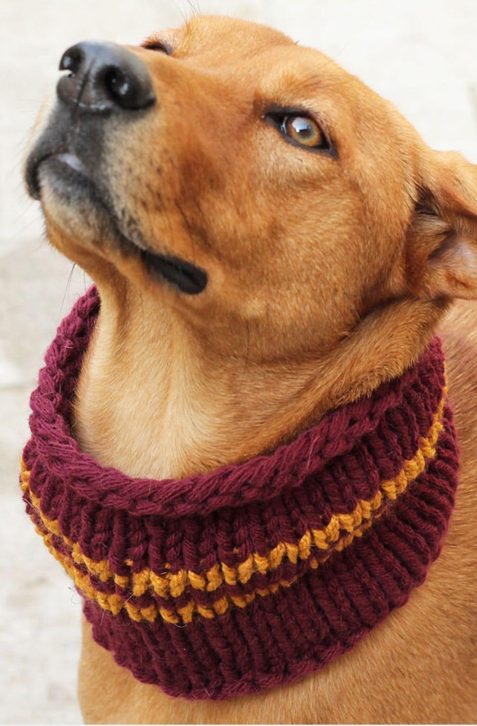 Gryffindor Dog Cowl – Knitting Pattern