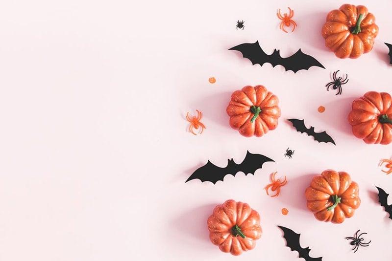 mini orange pumpkins and black bats