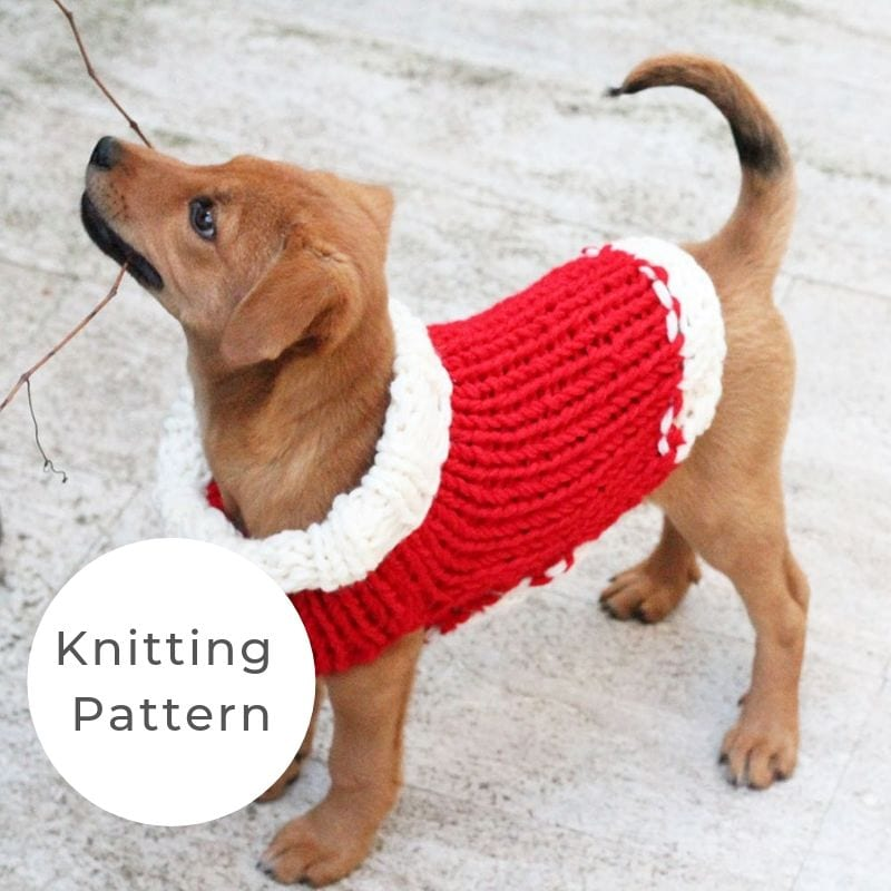 Christmas puppy sweater