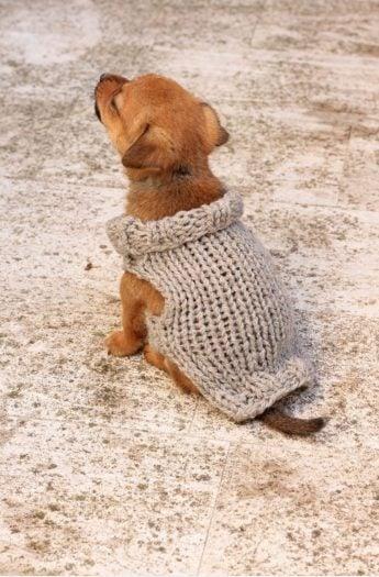 Puppy Sweater Knitting Pattern {XS Puppy)
