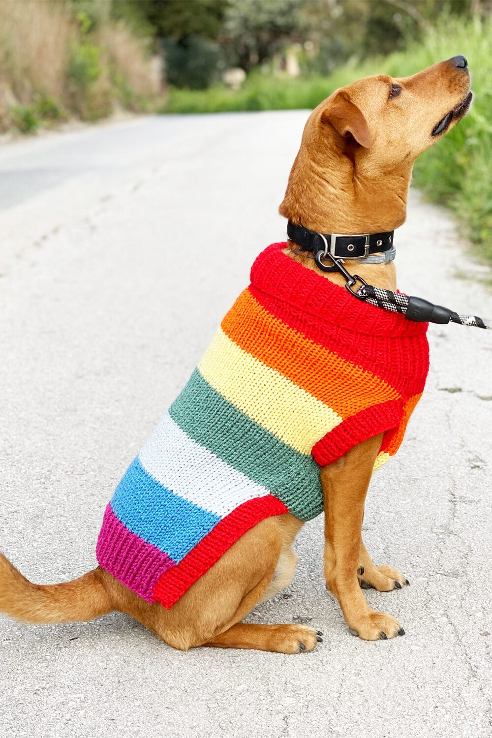 Rainbow dog sweater
