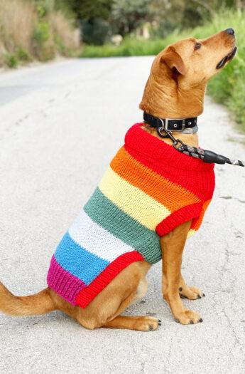 Dog Jumper Knitting Pattern - Rainbow Stripes
