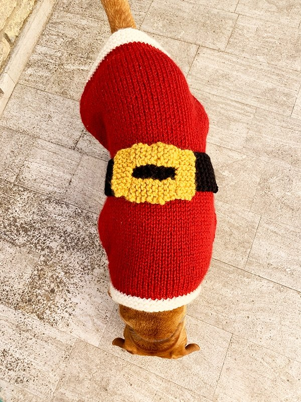 dog wearing a knitted Santa Claus jumper