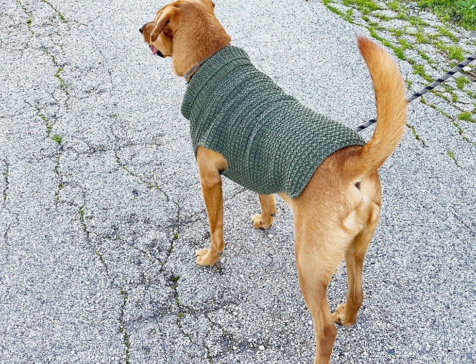 dog jumper knit with DK yarn