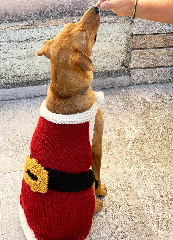 knitted dog sweater with belt