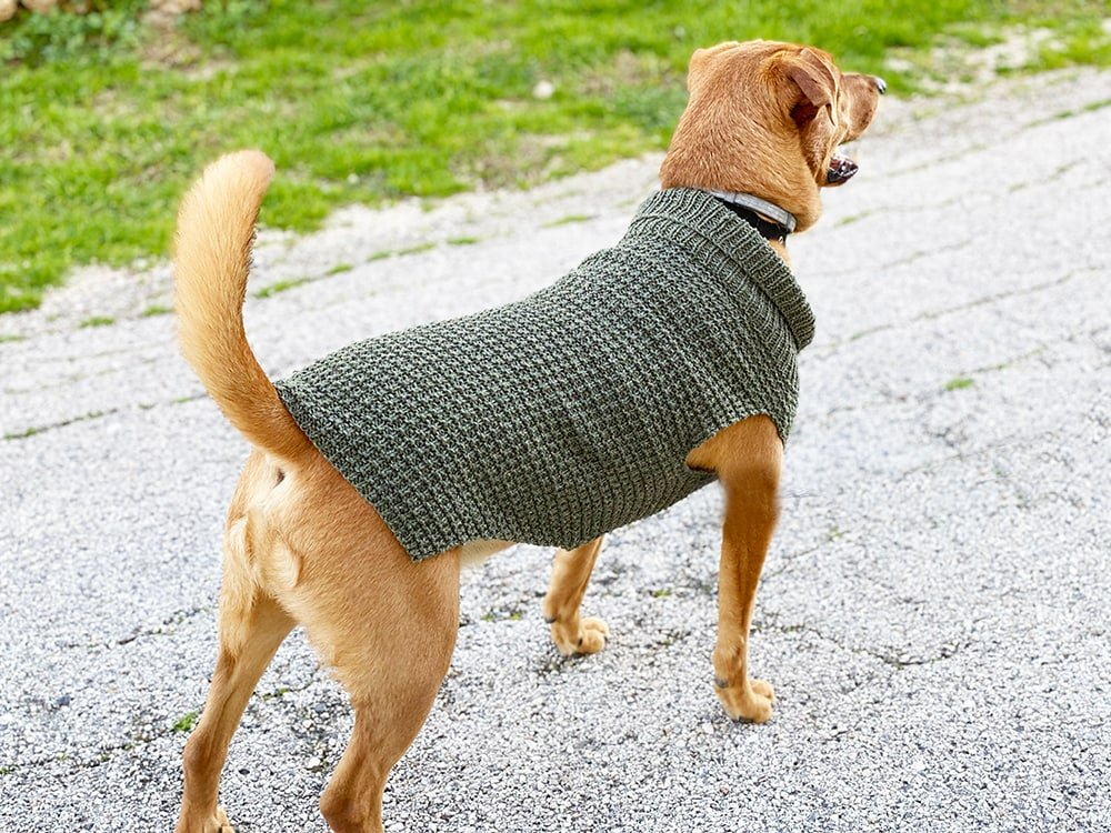 dog wearing a jumper