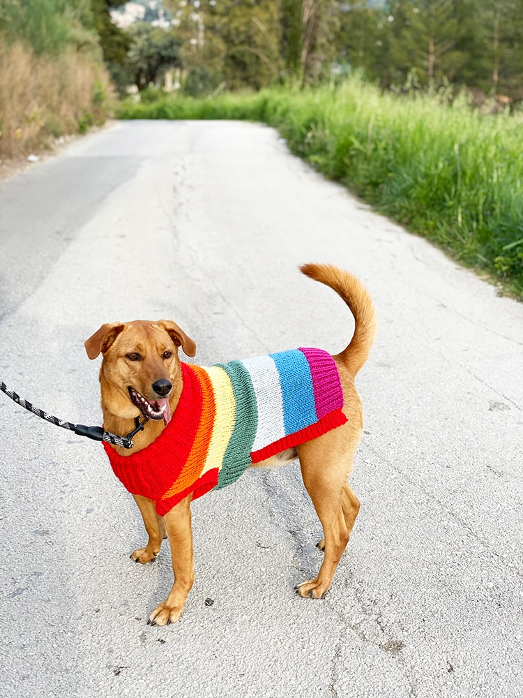 dog jumper knitted with rainbow stripes