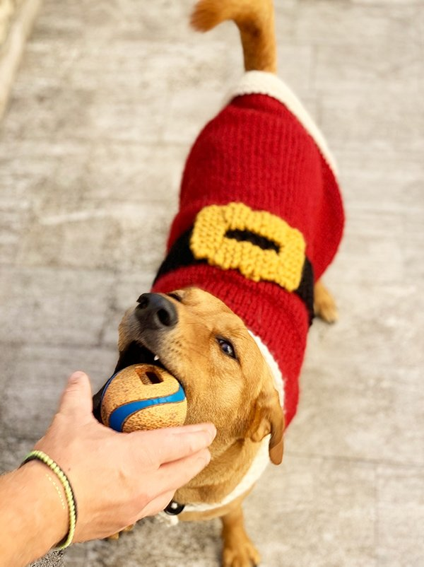 dog Santa Claus Christmas sweater with belt