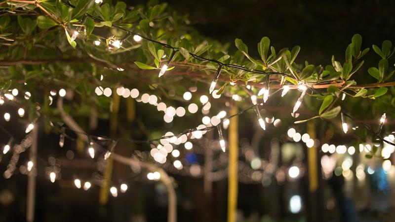 garden fairy lights strung through trees at night