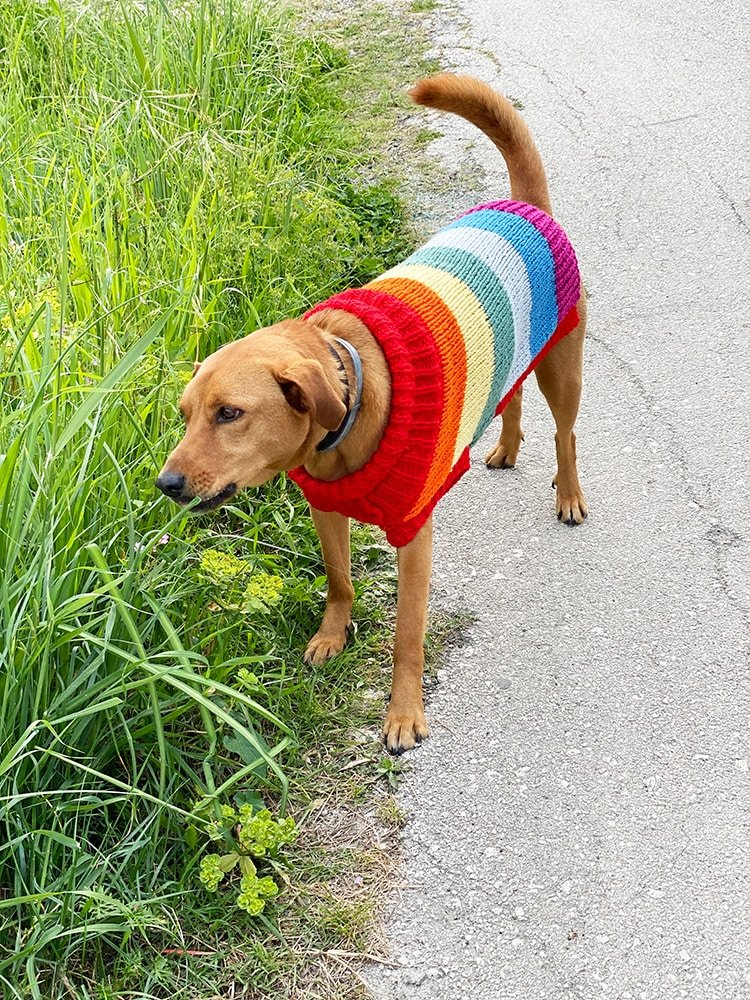 knitted dog jumper in rainbow stripes