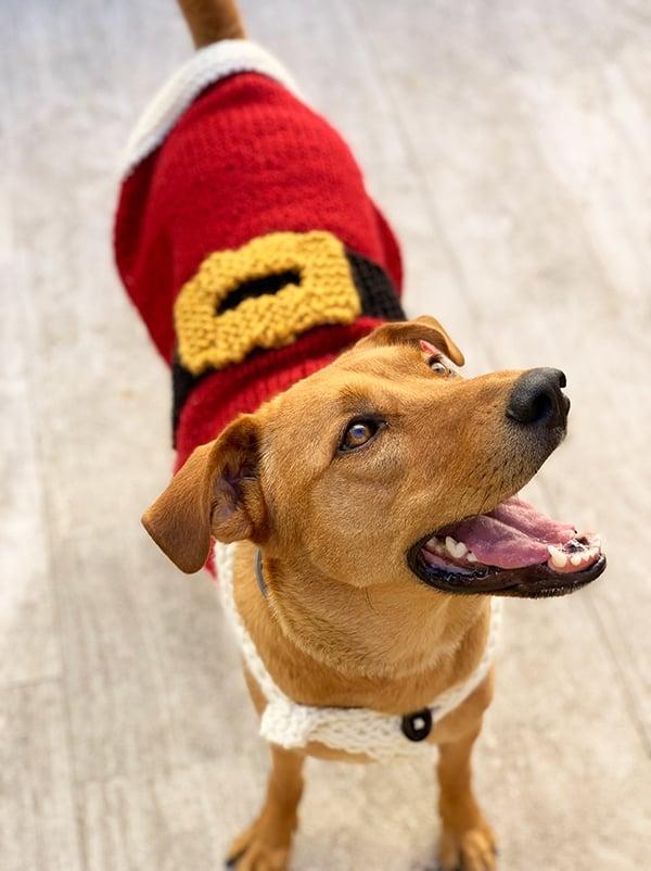 dog wearing a Santa Claus Christmas sweater