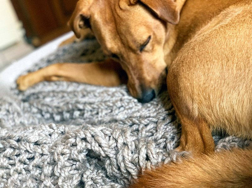 dog sleeping on a hand knit throw blanket