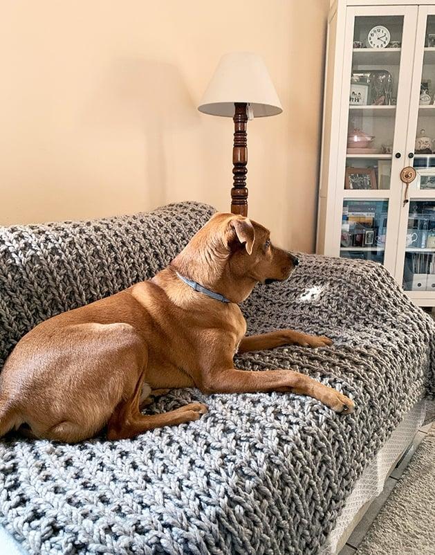 dog lying on handmade blanket