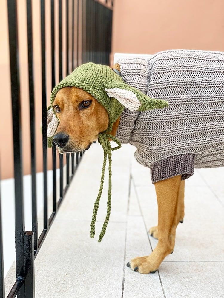 the-child-dog-sweater-costume